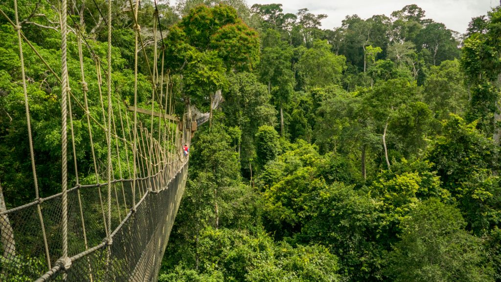 Canopy walk in Kakum National Park. Good holiday destination in Ghana