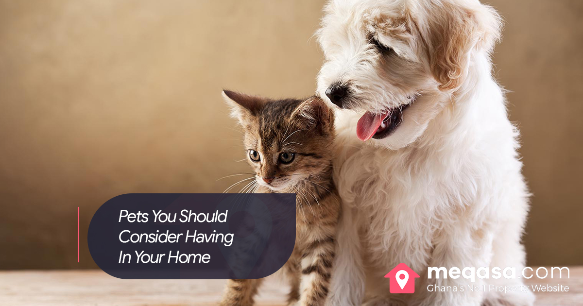 Pets You Should Consider Having In Your Home