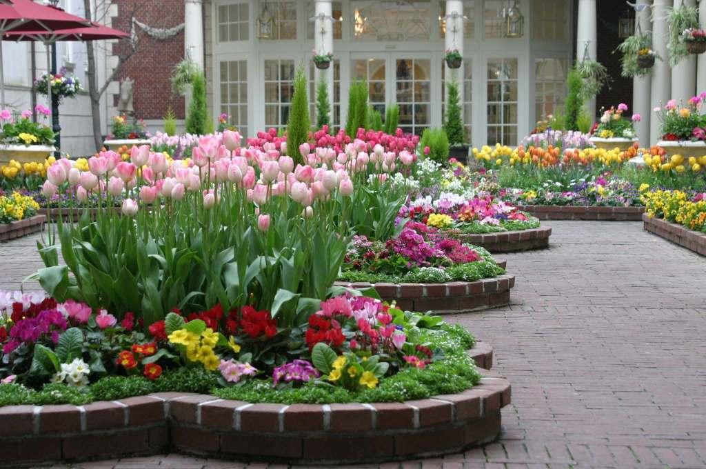 Image result for flower plant,nari