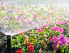Creating Your Perfect Flower Garden