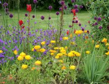 5 Sure-Fire Ways to Put an End to Garden Weeds