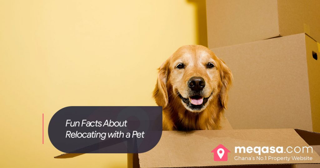 Facts about Relocating with a Pet