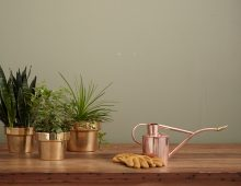 10 Easy Steps To Create A Home Garden
