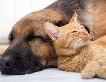 Living in Harmony with Your Dog and Cat